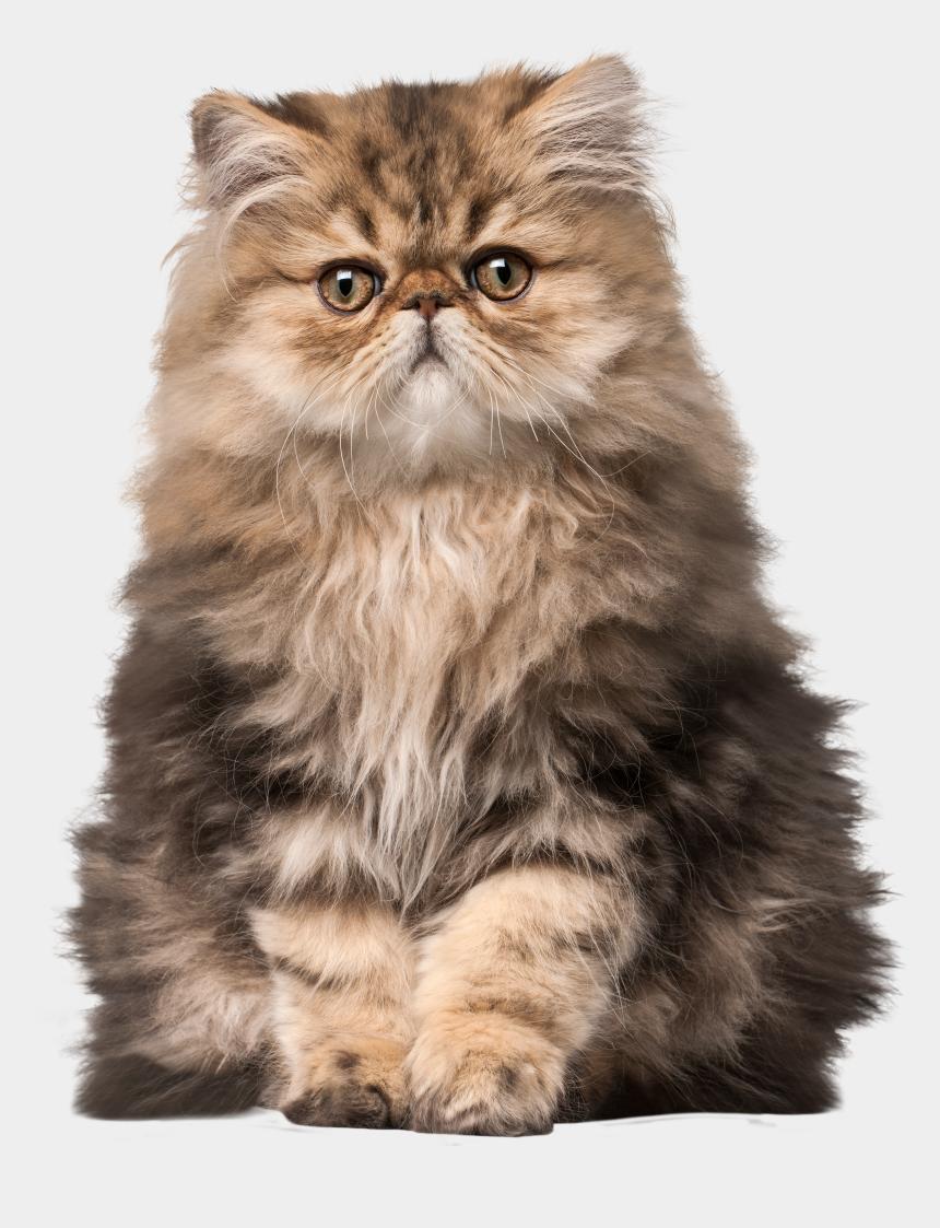 cat clip art, Cartoons - Cat Png Clip Art - Realistic Cat Clip Art