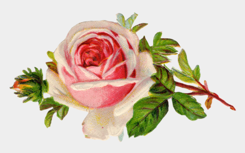 rose clip art, Cartoons - Free Vintage Rose Clip Art - Free Victorian Flower Clipart