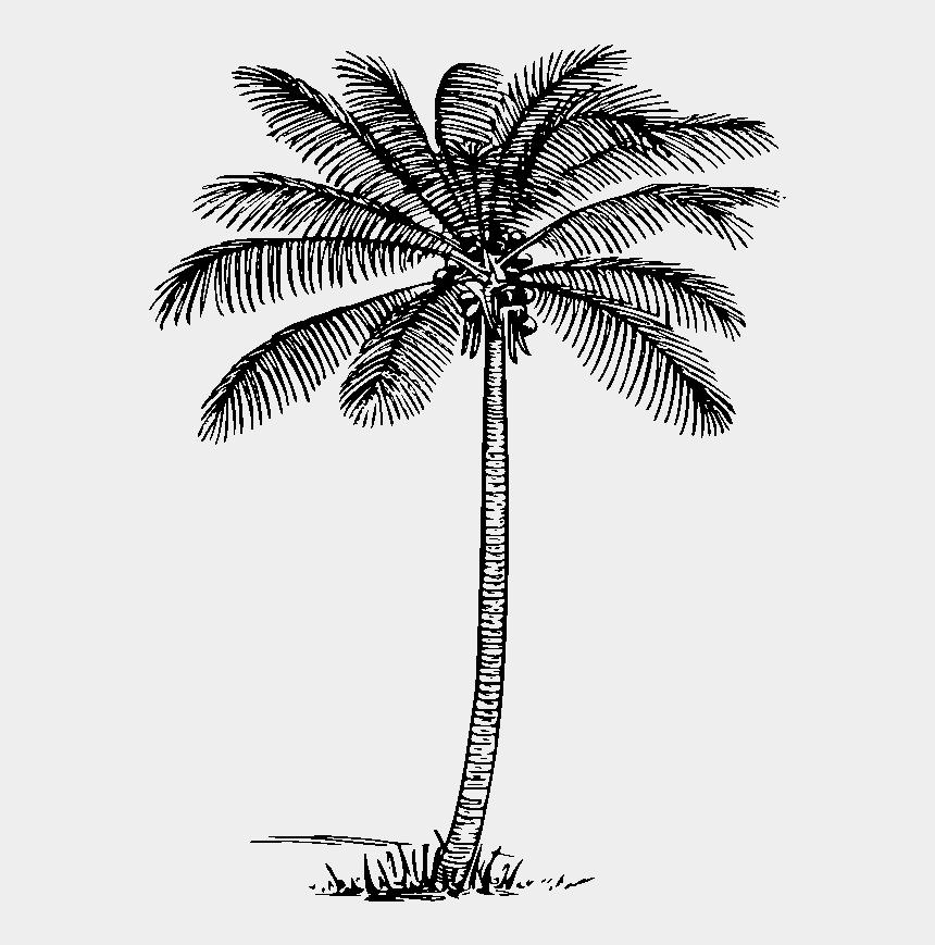 tree clip art, Cartoons - Coconut Tree Clipart Black And White - Date Tree Clipart Png Black And White