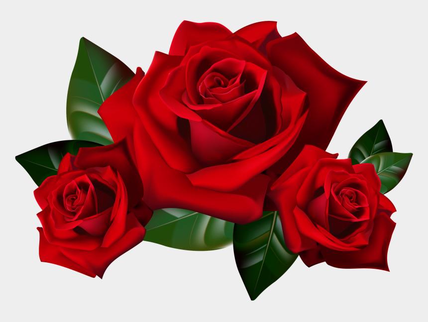 rose clip art, Cartoons - Bouquet Of Roses Frame Clipar - Transparent Background Red Roses Png