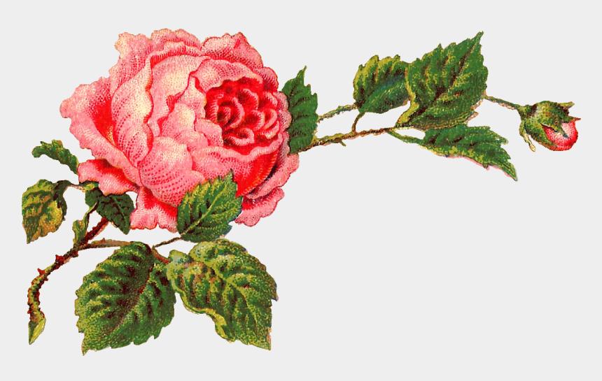 rose clip art, Cartoons - Free Digital Flower Label Pink Rose Clip Art And Corner - Vintage Rose Art Png