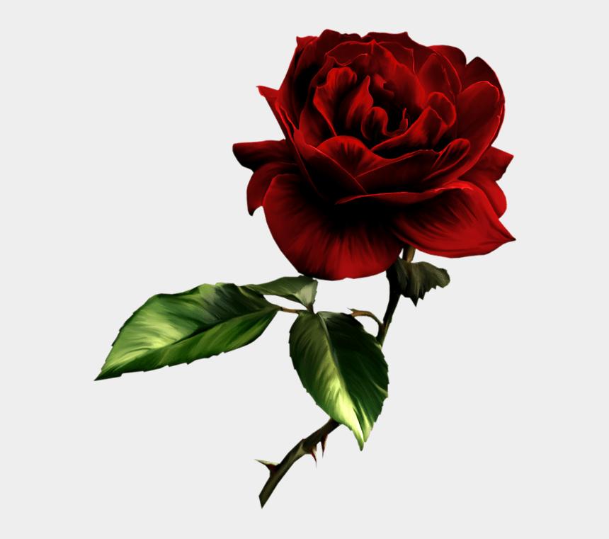 rose clip art, Cartoons - P Clipart Raindrops On Rose - Розы Пнг