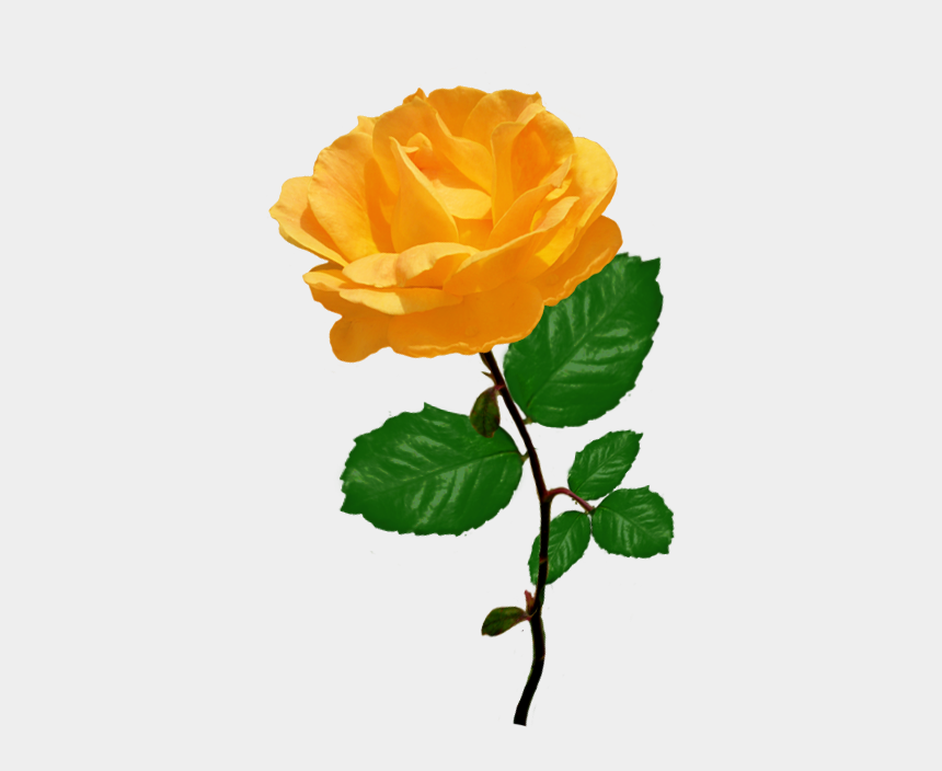 rose clip art, Cartoons - Red Red Rose Clipart - Orange Rose Clip Art