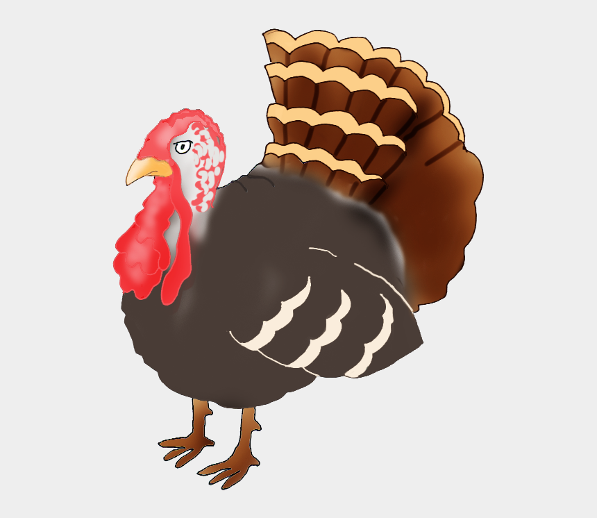 turkey clipart, Cartoons - Happy Thanksgiving Clipart - Turkey Drawing Png