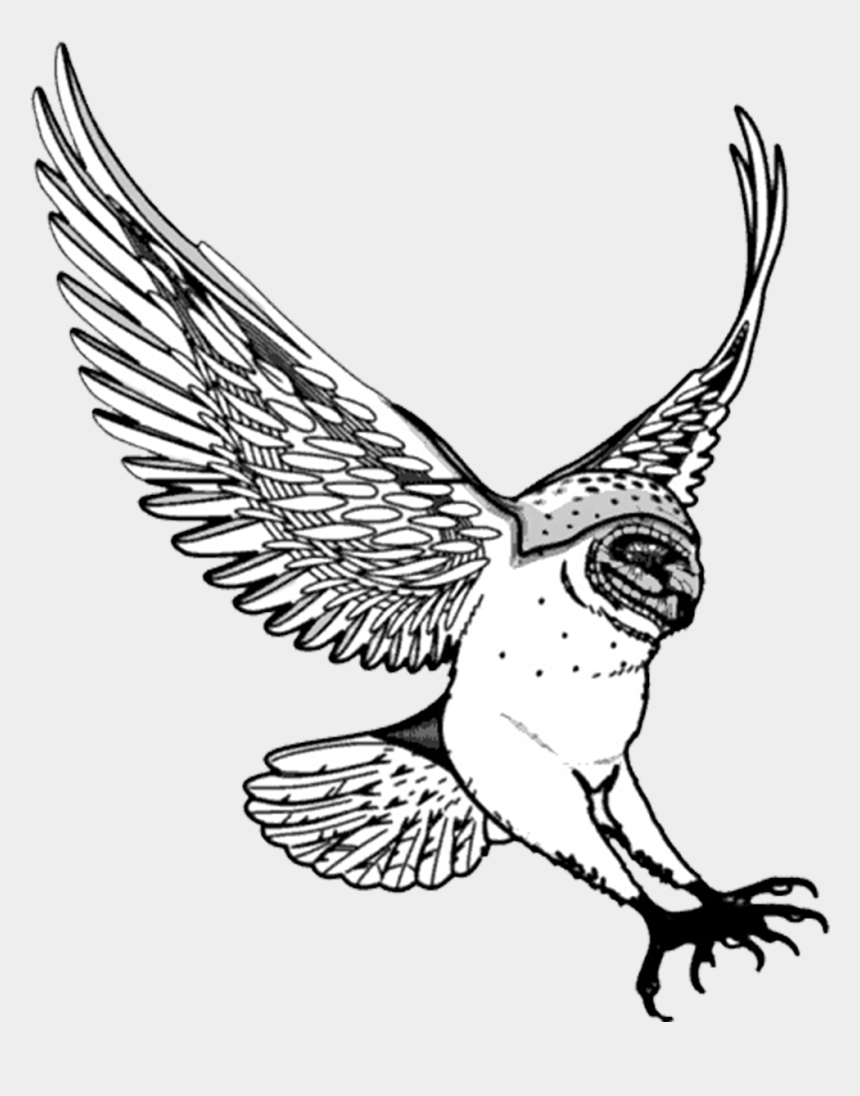 owl clip art, Cartoons - Drawing Of Barn Owl Swooping - Owl Drawing Png