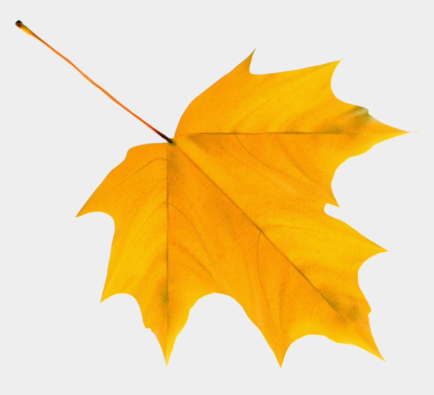 leaf clip art, Cartoons - Yellow Leaf Clipart - Autumn Leaves Clipart Png