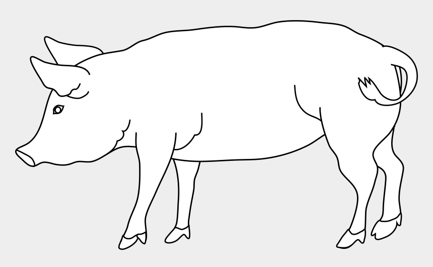 Pig Coloring Page - White Pig Clipart Png, Cliparts ...