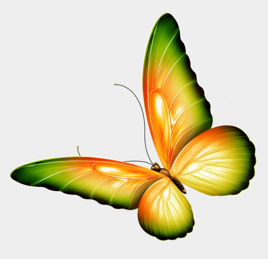 butterfly clipart, Cartoons - Free Clipart Transparent Little Butterfly - Butterfly Clipart Transparent Background