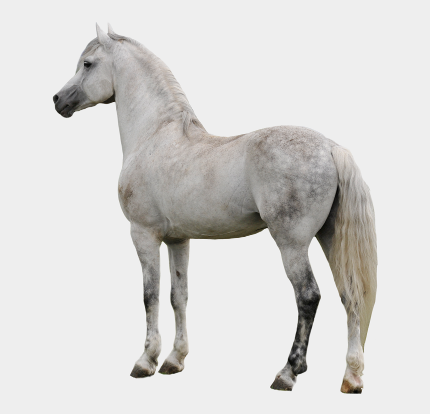 horse clipart, Cartoons - Horse Clipart - Transparent Background White Horse Png