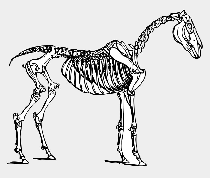 horse clipart, Cartoons - Animal Skeleton Drawing At Getdrawings - Horse Skeleton Clipart