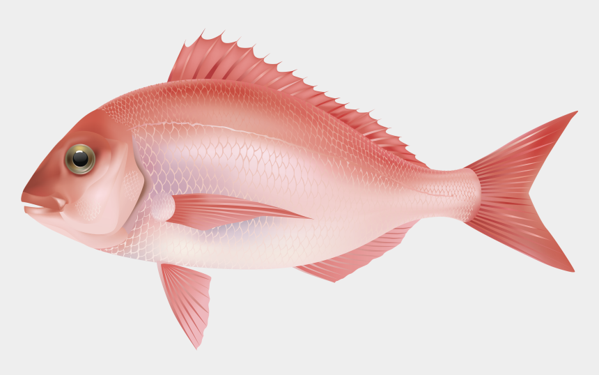 fish clipart, Cartoons - Tropical Fish Clipart Under Sea - Fish Png