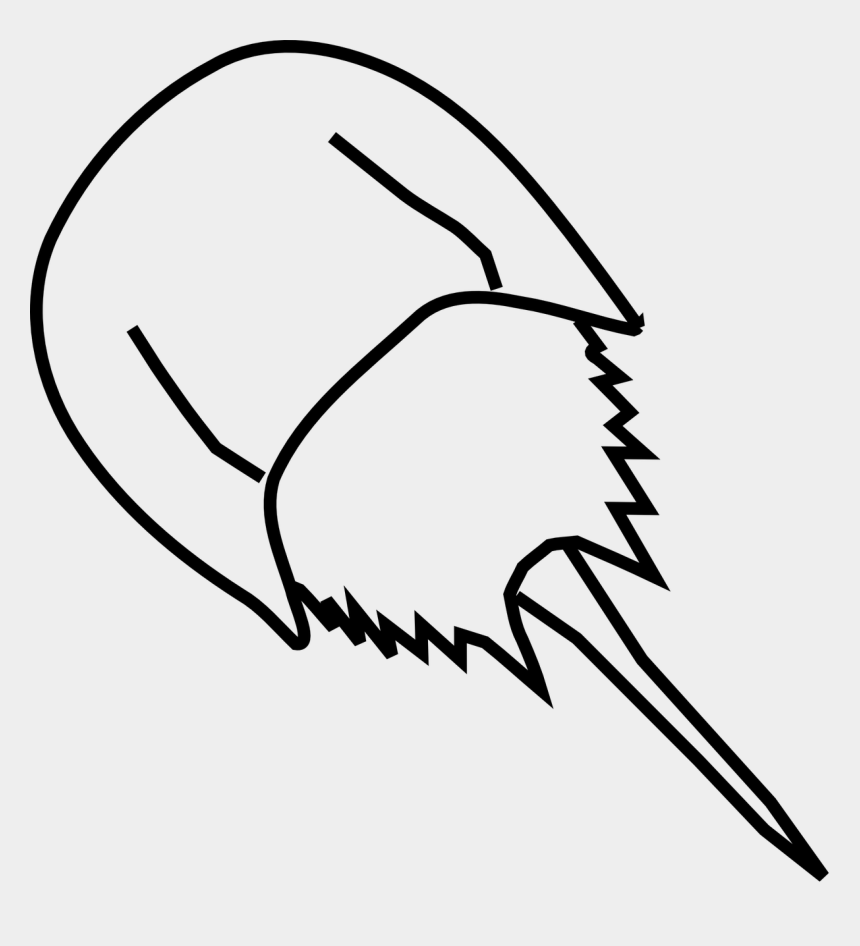 animal clipart, Cartoons - Draw A Horseshoe Crab