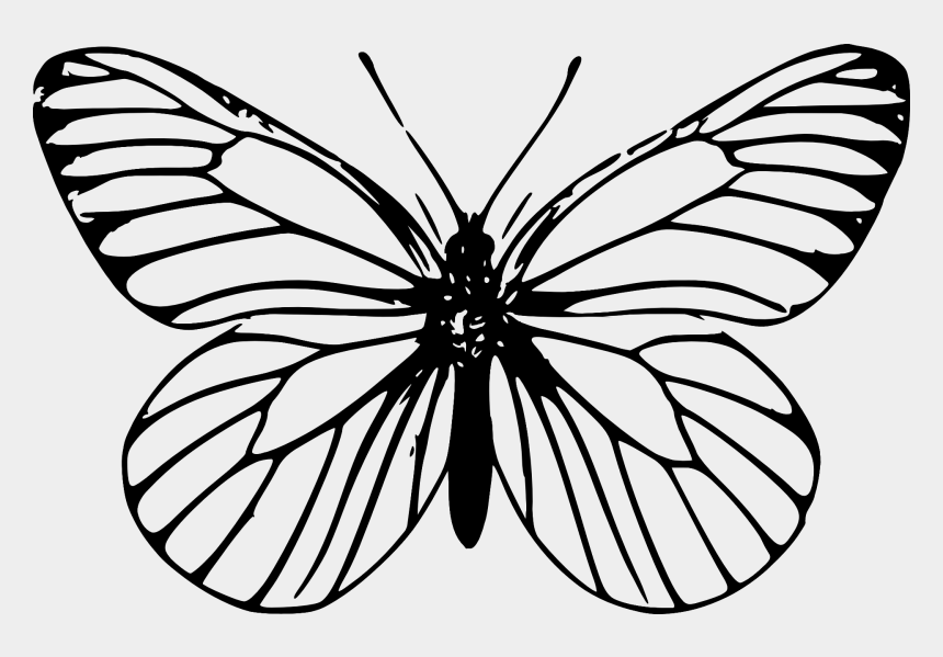 butterfly clip art black and white, Cartoons - Papillon / Butterfly - Butterfly Outline