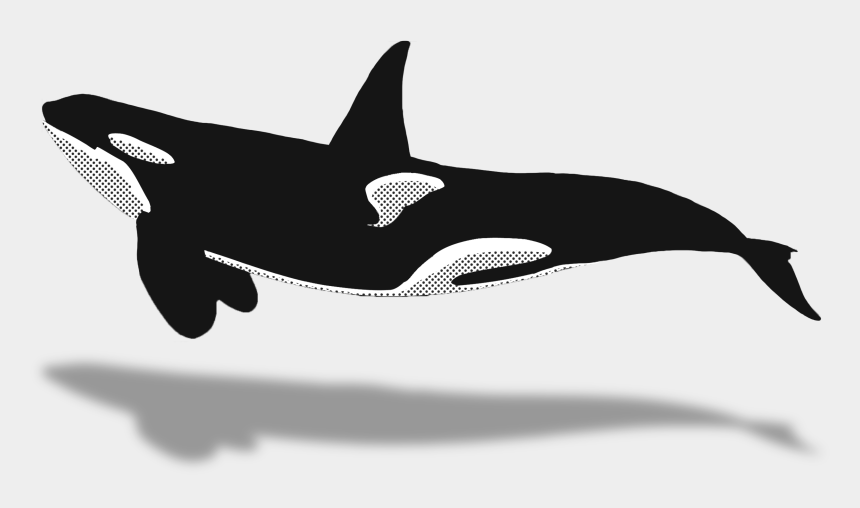 Dolphins Clipart Animal Sea Nz - Killer Whale Top View ...