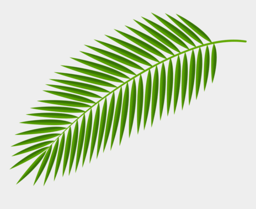 palm sunday clip art, Cartoons - Palm Clipart Green Branch - Transparent Background Palm Leaves Png