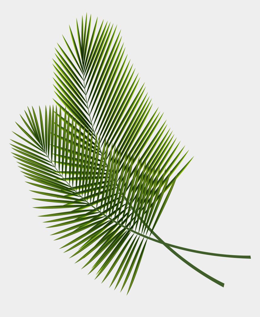 palm sunday clip art, Cartoons - Leaf Arecaceae Palm Branch Clip Art - Transparent Tropical Leaves Clipart