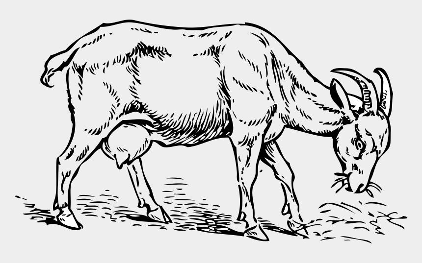 horizon clipart, Cartoons - Clipart Of Horizon, Goat And Animal Eating - Cartoon