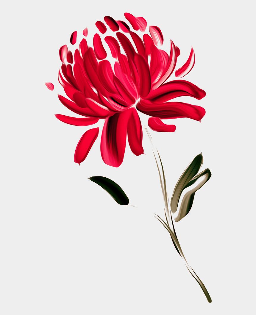 chrysanthemum clipart, Cartoons - Australia Waratah Painted Chrysanthemums Chrysanthemum - Drawing Of Waratah