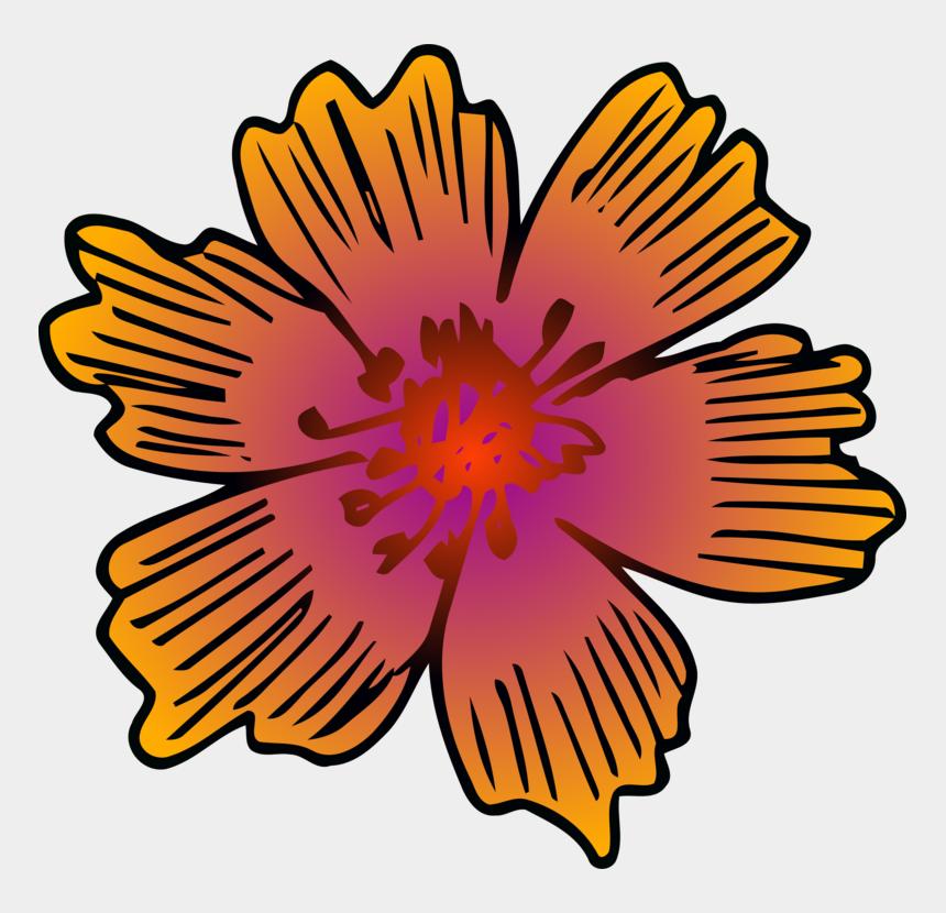 chrysanthemum clipart, Cartoons - Chrysanthemum Floral Design Flower Symmetry - Barberton Daisy