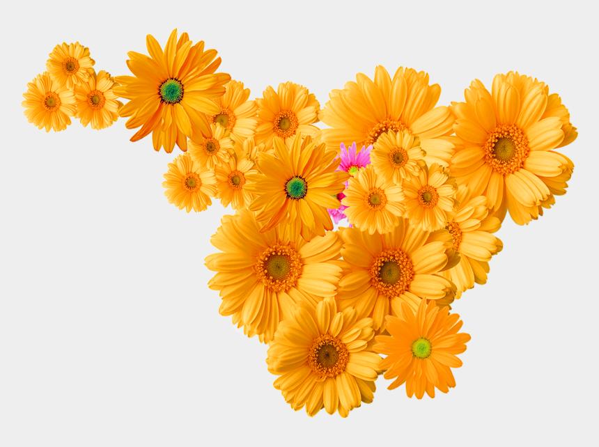 chrysanthemum clipart, Cartoons - Orange Flowers Png Transparent