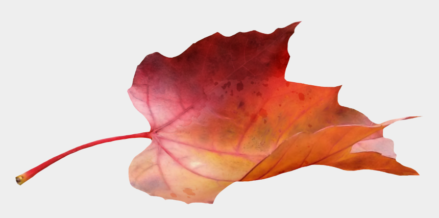 blowing fall leaves clipart, Cartoons - Blowing Leaves Png - Fall Leaf Side View