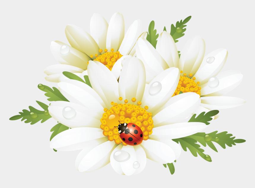 chrysanthemum clipart, Cartoons - Summer Flower Png