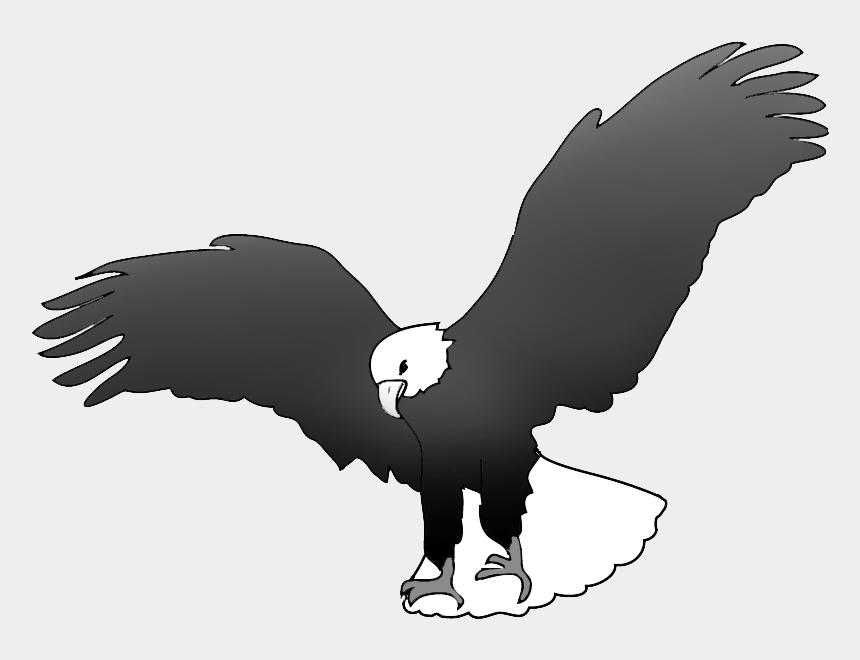 Bald Eagle Landing Black White Eagle Drawing Black And