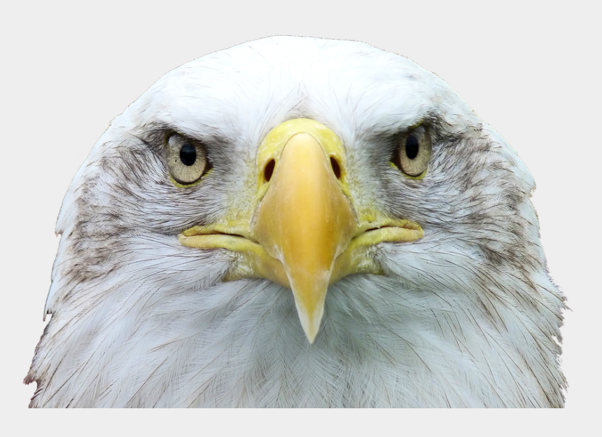 american eagle clipart black and white, Cartoons - Adler, White Tailed Eagle, Bald Eagle - Bald Eagle Head