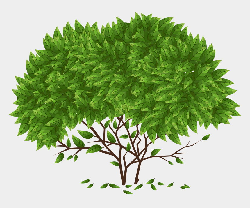 herb clipart, Cartoons - Tree Png Clip Art - Knowledge Should Make You Humble Not Arrogant