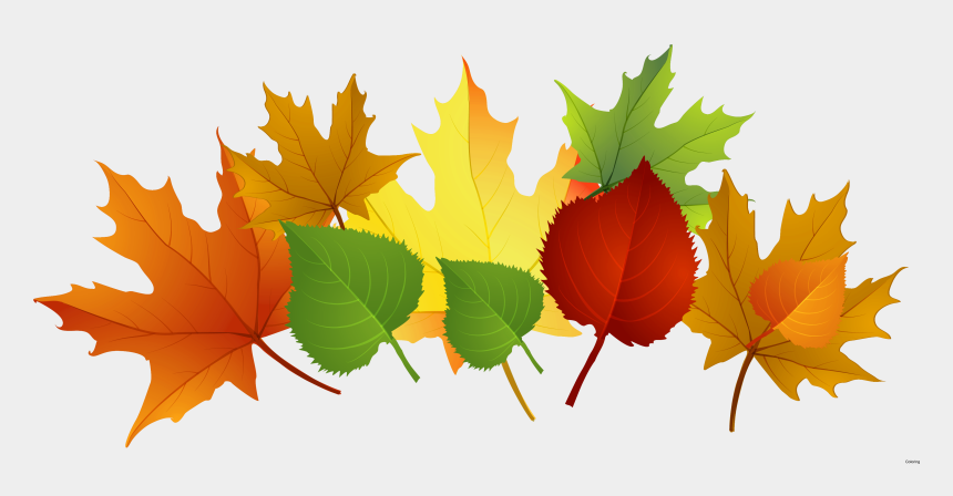 picture about Printable Fall Leaf named Slipping Leaves Clipart Png - Printable Drop Leaves Clip Artwork