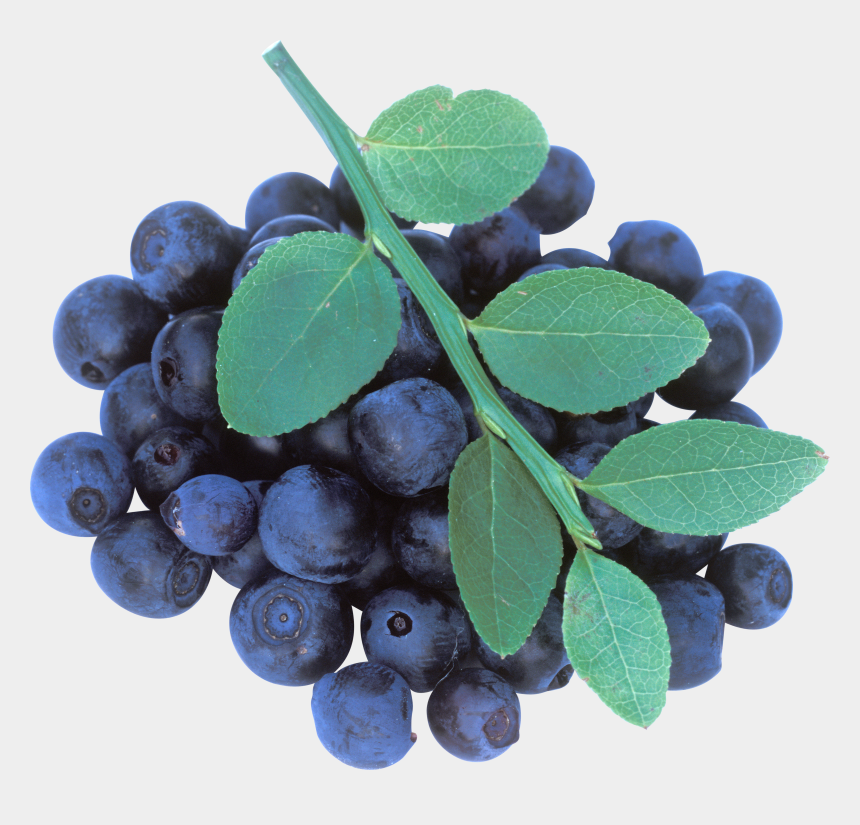 blueberries clipart, Cartoons - Blueberrys With Leaves Png Image - Huckleberry
