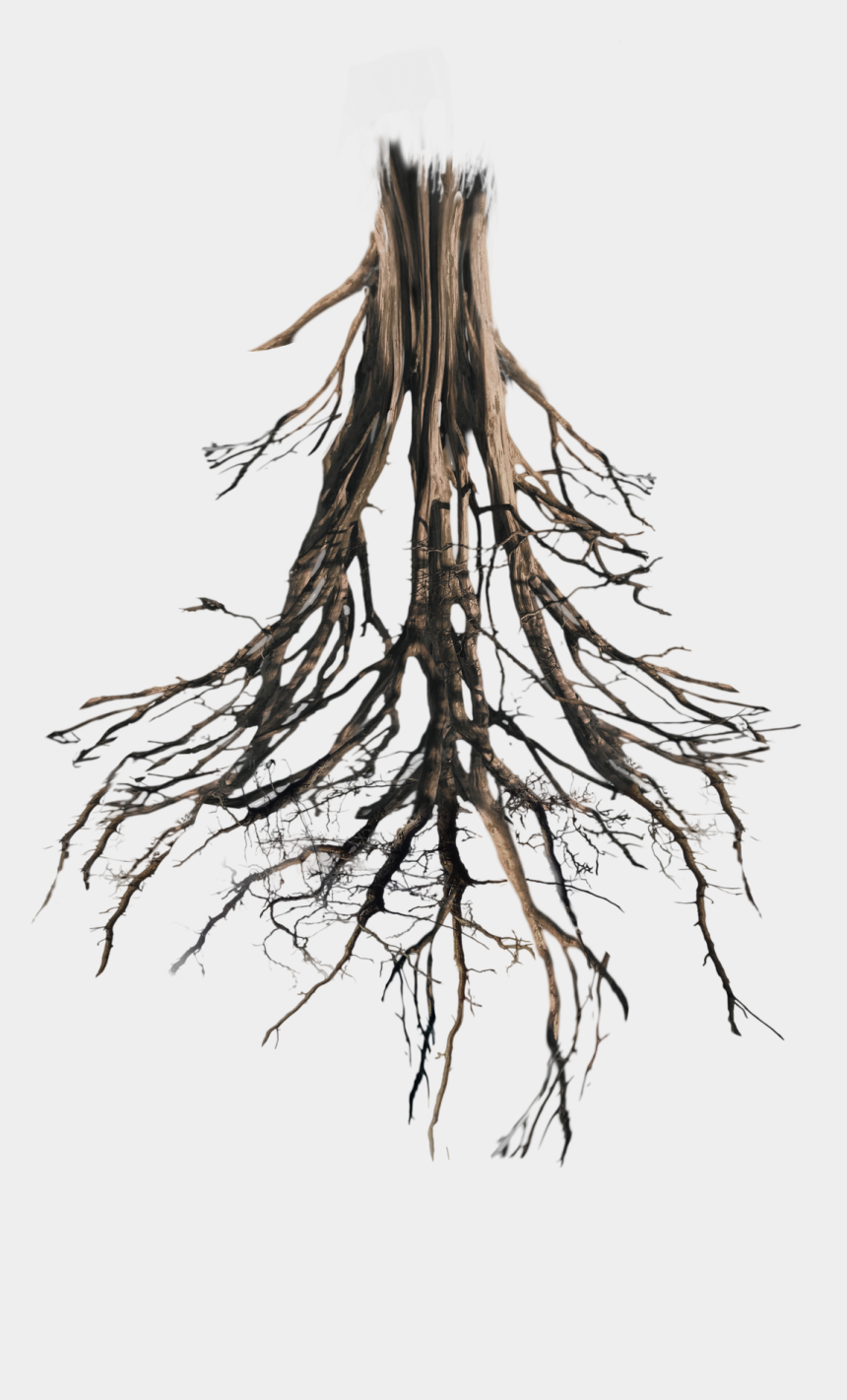 tree roots clipart, Cartoons - Tree With Roots Png - Transparent Tree Roots Png