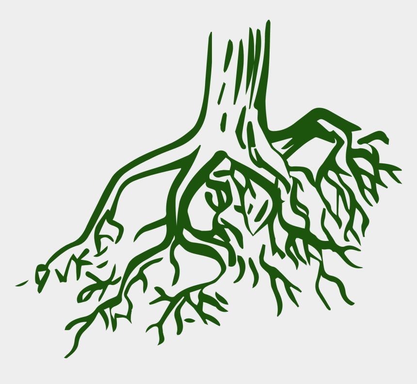 Roots Clipart Root Texas - Tree Root Coloring Pages ...