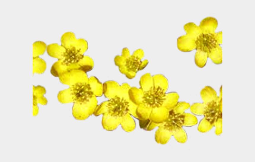 barley clipart, Cartoons - Yellow Flower Clipart Border - Spring Flower Clipart