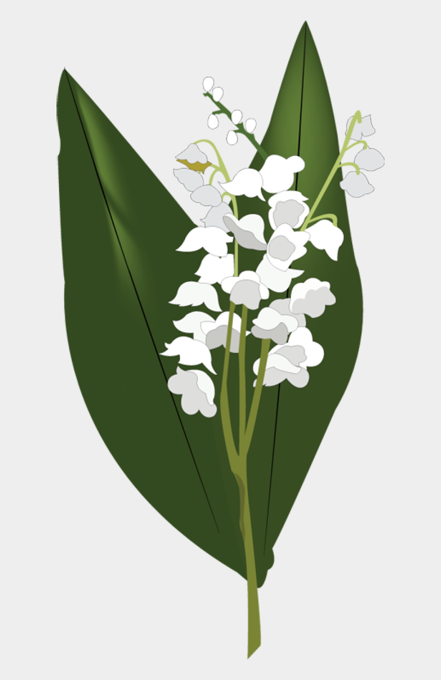 lilies clipart, Cartoons - Web Design Development Lily - Lily Of The Valley Aephi