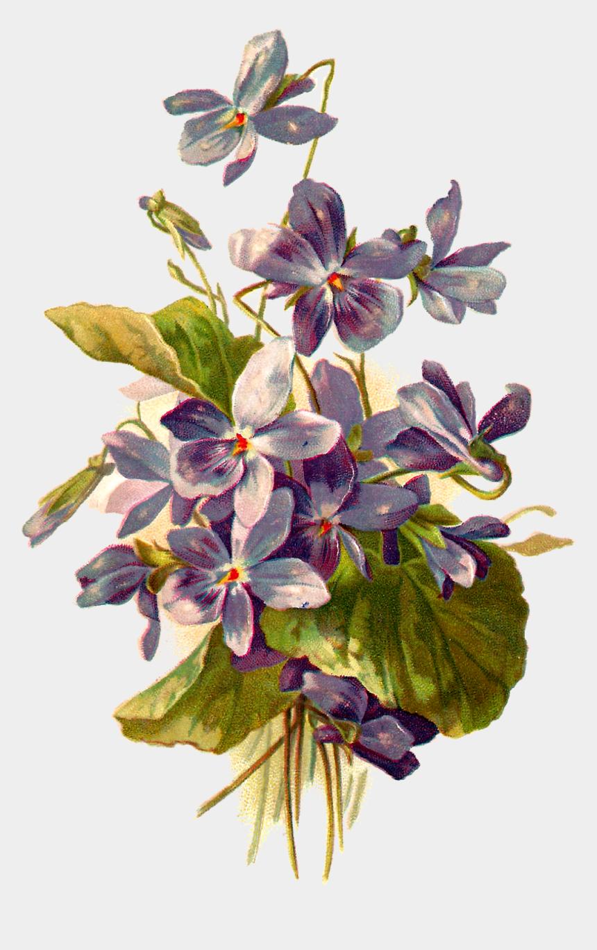 forget me not flowers clipart, Cartoons - Flower Illustration Png - Botanical Violet Flower Illustration