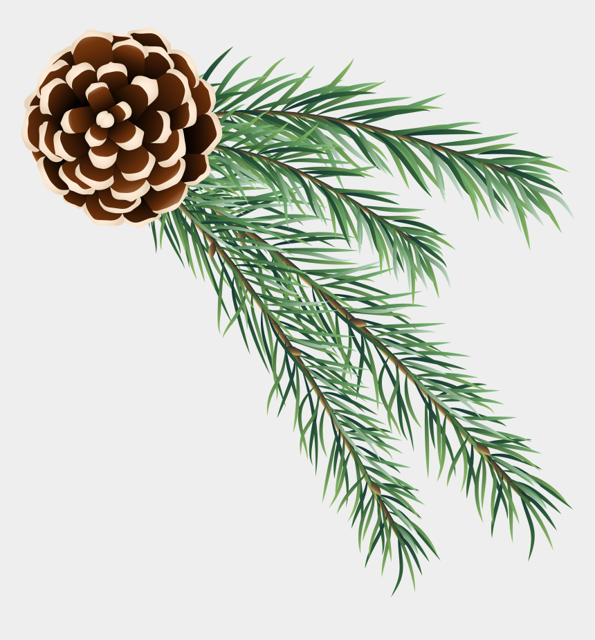cones clipart, Cartoons - Christmas Decorated Pine Cones Png - Pine Branch Pine Cone Transparent Background