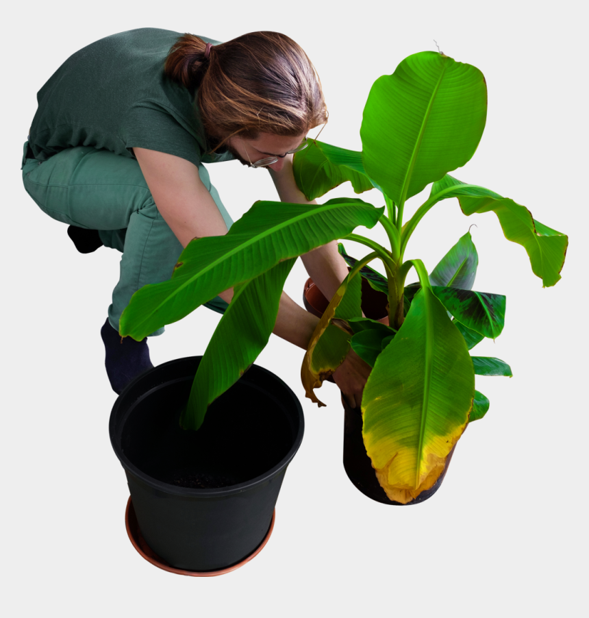 gardener clipart, Cartoons - Replanting His Banana Trees - People Planting Cut Out
