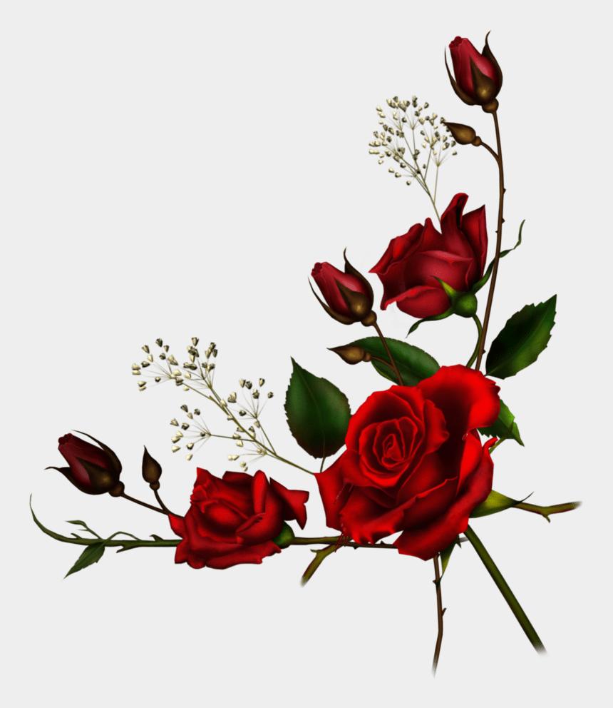 vine border clipart, Cartoons - Rose Vine Borders - Transparent Background Roses Png