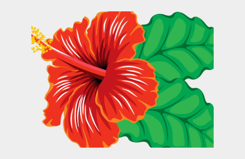 Flowers hibiscus. Clipart real flower red