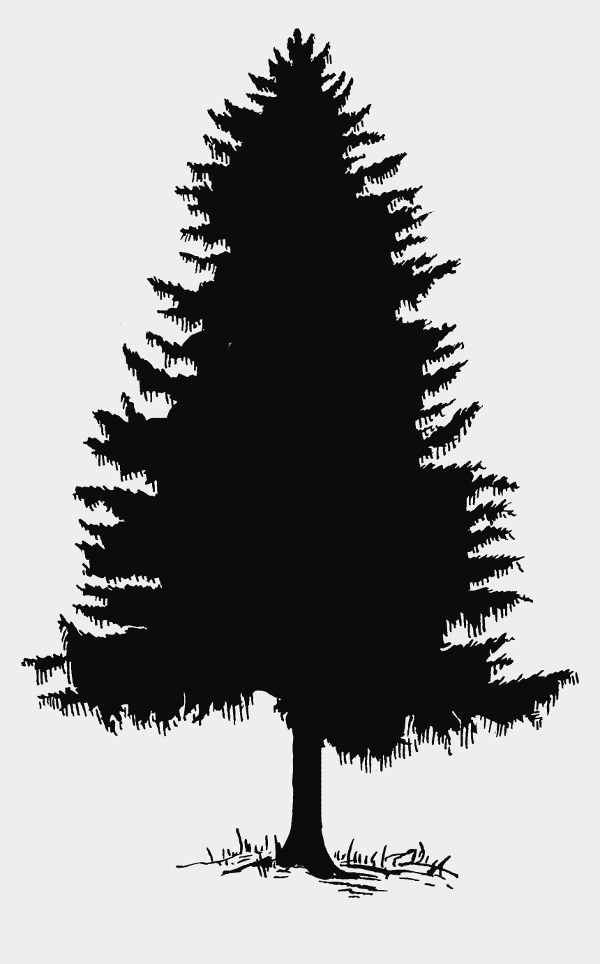 Pine Tree Tree Silhouette And Clip Art On 2 Transparent Pine Tree Silhouette Cliparts Cartoons Jing Fm