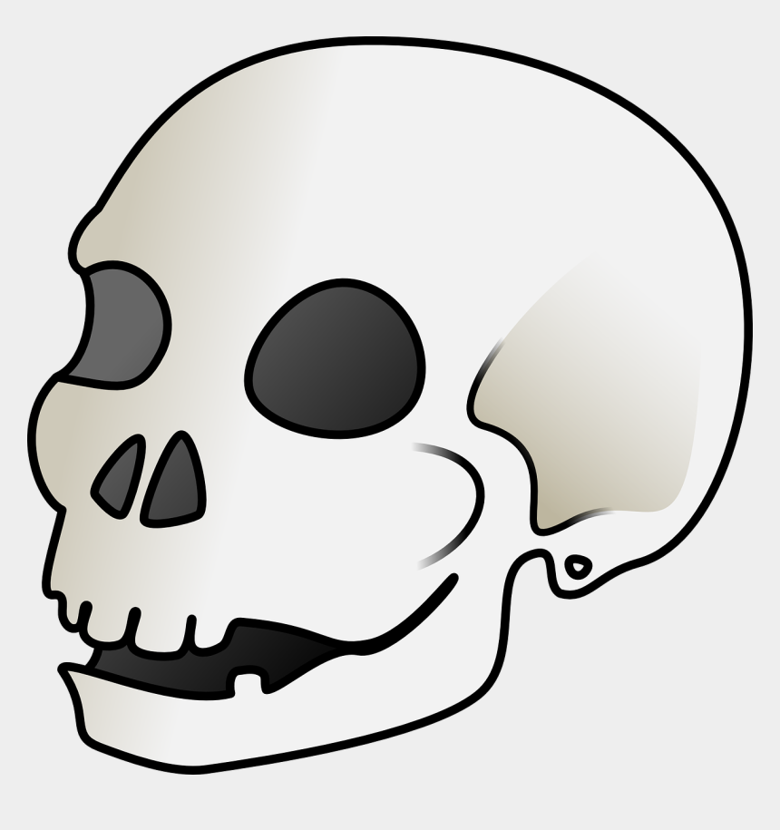 skull clip art, Cartoons - Human Skull Svg Clip Arts 588 X 599 Px - Cartoon Picture Of A Skull