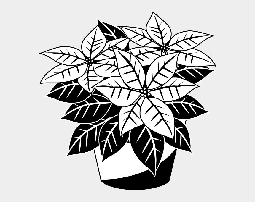 poinsettia clipart, Cartoons - Poinsettias Clipart Manglik - Poinsettia Flowers Black And White