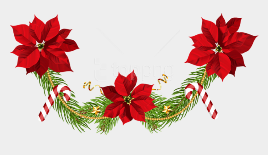 poinsettia clipart, Cartoons - Free Png Christmas Poinsettias Garland Png - Clip Art Christmas Poinsettias