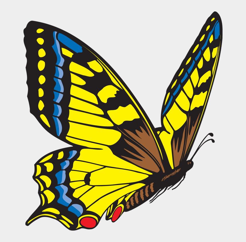 butt clipart, Cartoons - Clipart > Categories > Butterfly Clipart - Flying Butterfly Clip Art