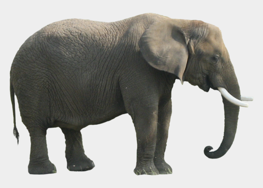 elephants clipart, Cartoons - Download Png Image Report - Animal Body Parts Elephant