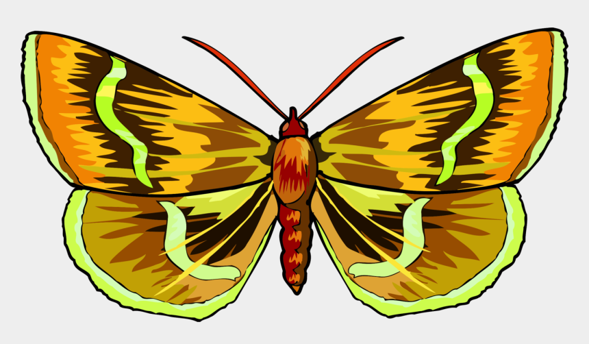 butt clipart, Cartoons - Monarch Butterfly Moth App Store Brush-footed Butterflies - Clip Art