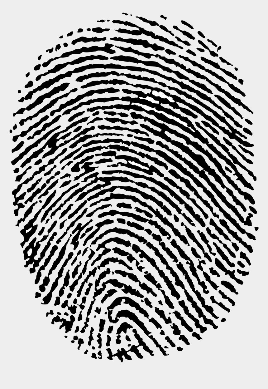 fingerprint clipart, Cartoons - Pngimg - Com - Отпечаток Пальца Пнг