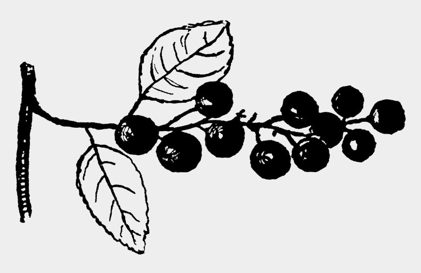 cherry tree clipart, Cartoons - Cherry Tree Stop By My - Seedless Fruit