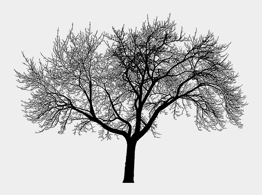 dead trees clipart, Cartoons - Dead Trees Forest Black And White For Kids - Fractals In Nature Tree
